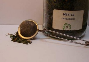 tea_infuser_nettle_320h