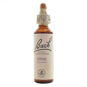 Flower Delivery Glasgow on Store   Homeopathy   Bach   Bach Flower Remedies   Vine Flower Remedy